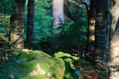 roccia nel bayerischer wald
