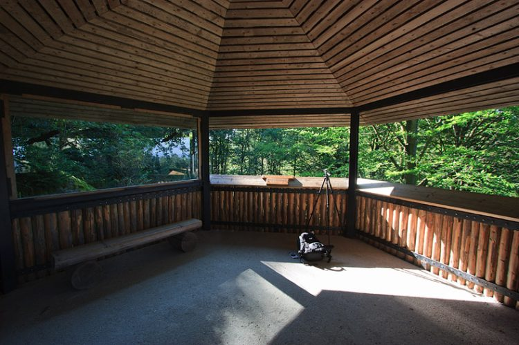 foto del parco bayerischerwald