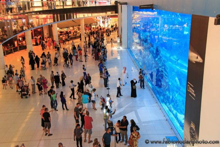 acquario nel mall of emirates a dubai