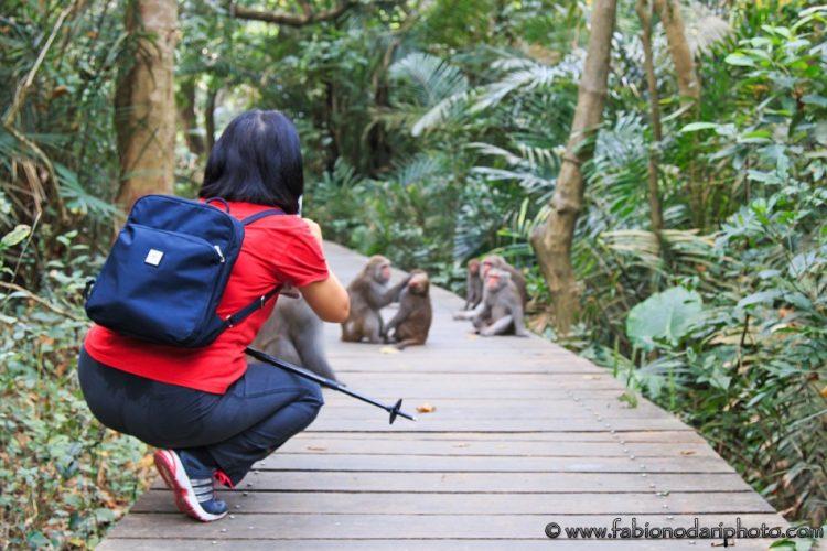 macaques taiwan