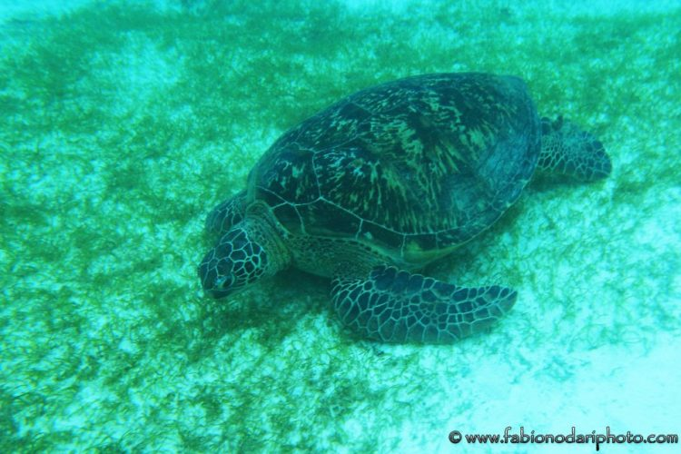 where to see the sea turtles in the philippines