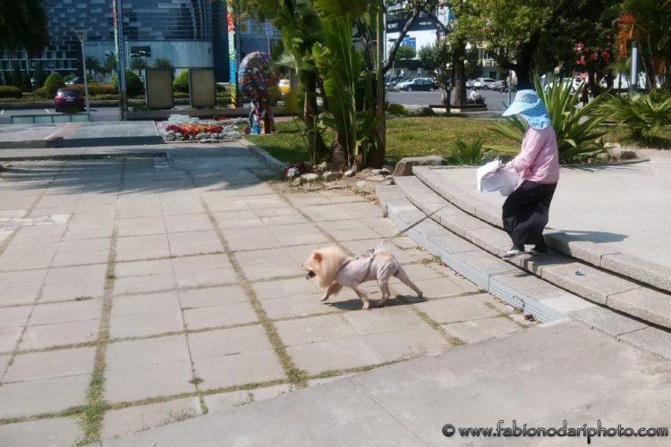 dog taiwan
