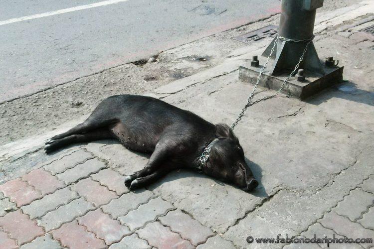 pets in taiwan