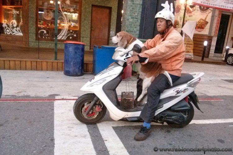 dog in taiwan