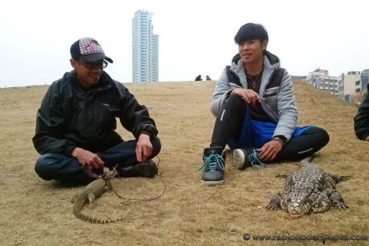animals in taiwan