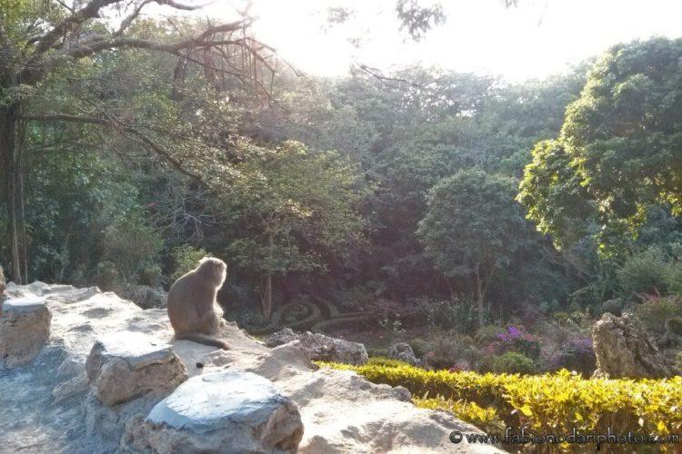 monkey taiwan