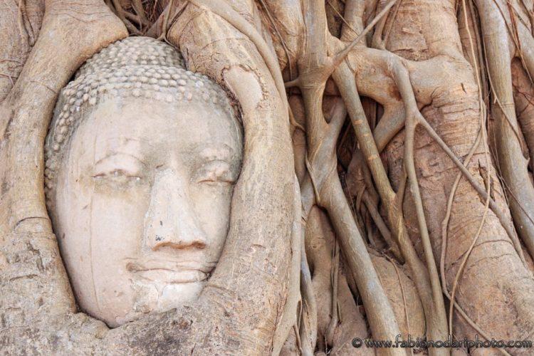 testa di buddha ad ayutthaya