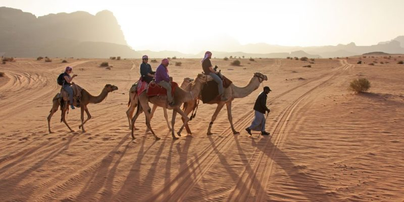 camels in the wadi rum in jordan