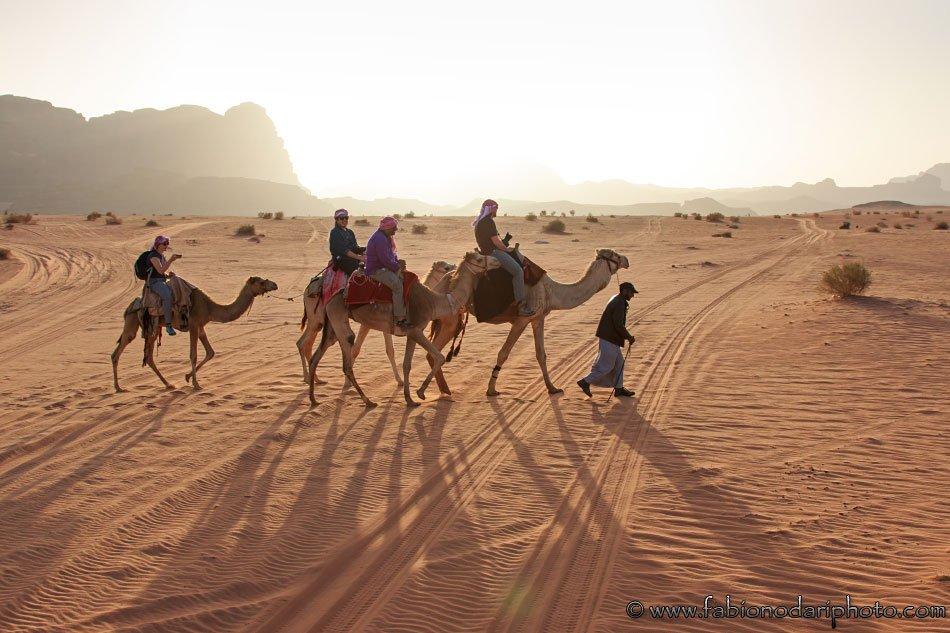 camels in the wadi rum in jordan