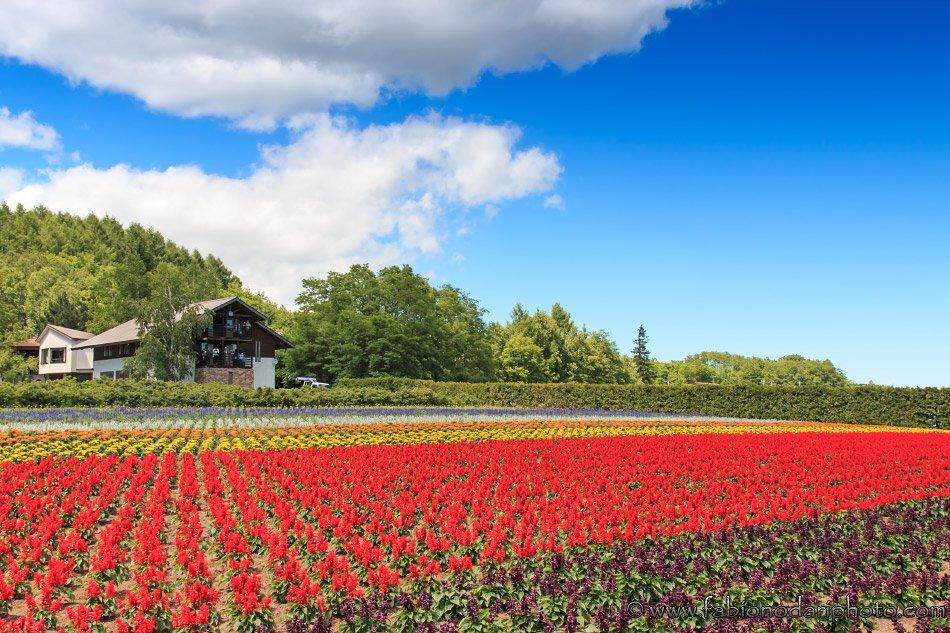 Japan - Hokkaido - Fabionodariphoto.com