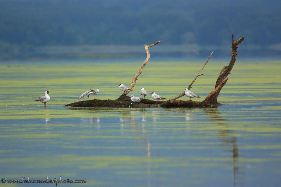 birds kerkini lake