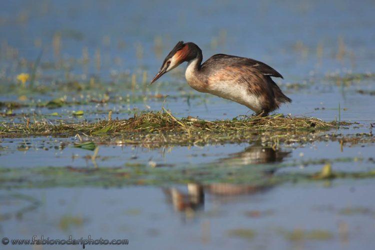 uccelli nel lago kerkini