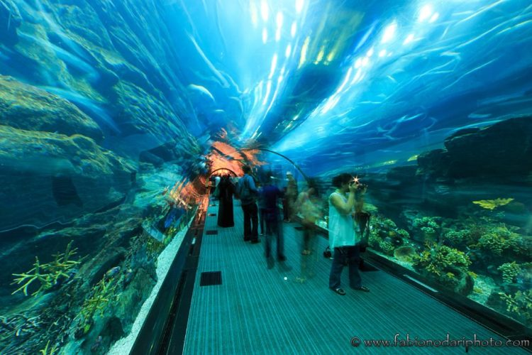 mall of the emirates acquario