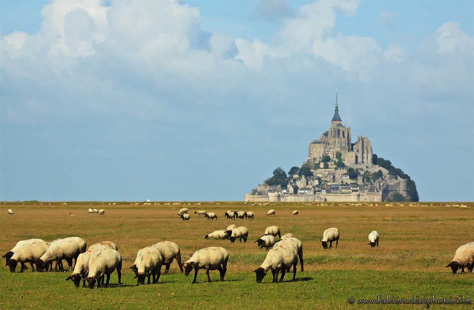mont saint-michel and sheep