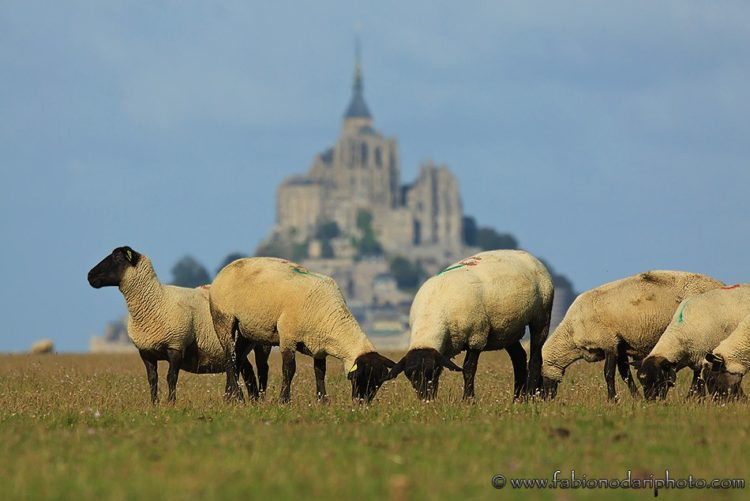 things to do and to see in normandy and brittany