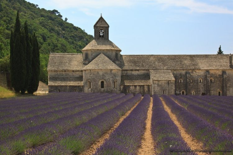 senanque abbey and lavander in france