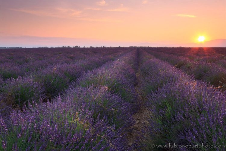 sunrise over a lavander filed in valensole provence