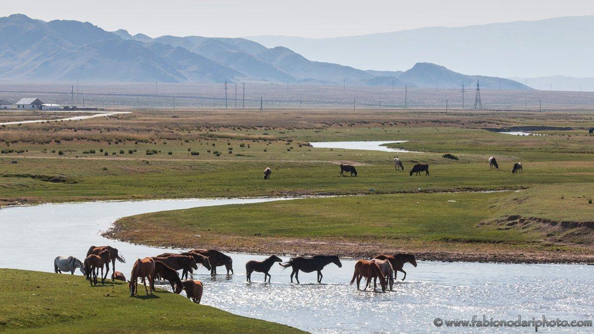 horses in kazakshtan