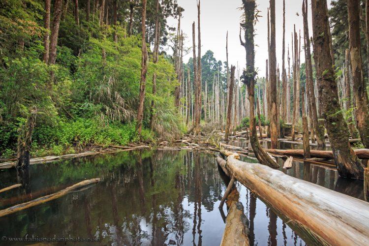 taiwan sunken forest
