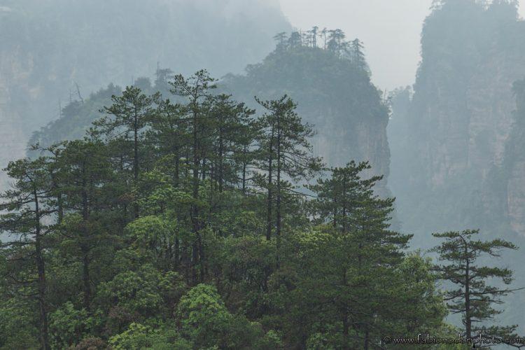 tianzi shan mountain zhangjiajie