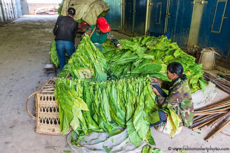Tobacco processing in Yunnan China